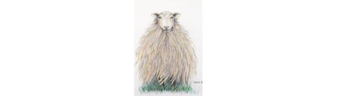Baskisch schaap